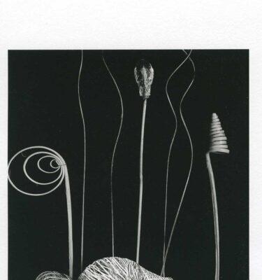 carta-opaca-fine-art-vision-310-matt